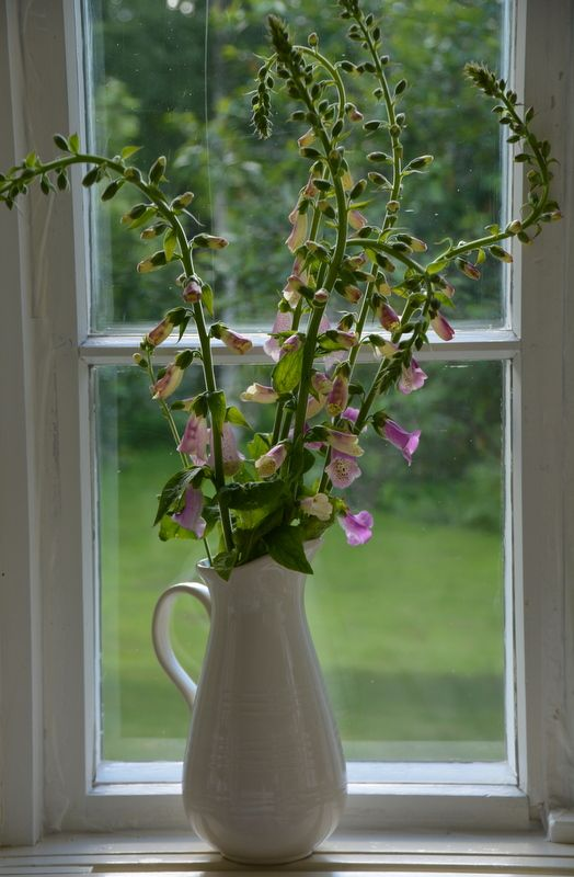 Flowers for the Midsummer at Strandhagen.