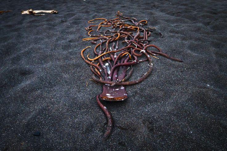 Alien Seaweed by Felipe Contreras on 500px