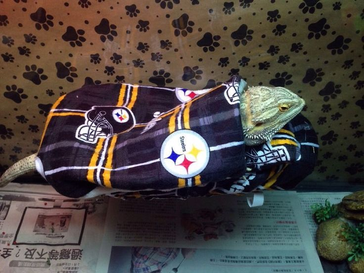BEARDED DRAGON ATTACHABLE RESTING BED NFL STEELERS PRINT SET COVERS  | eBay
