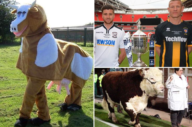 PETA slam FA for allowing Hereford to parade their bull Ronaldo at Wembley for FA Vase Final against Morpeth Town