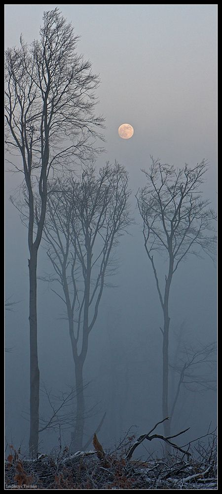 """""""Wolf Moon"""" by Tamas Ladanyi"""