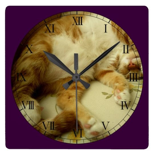Nite Nite Dreaming Cat Wall Clock by www.zazzle.com/htgraphicdesigner* #zazzle #cat #cute #wallclock #wall #clock #time #sleepycat #sleepingcat