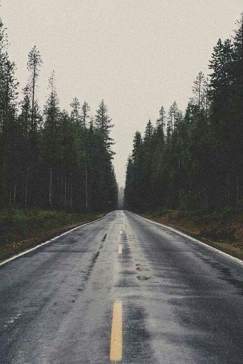 #iphone #road #trees #wallpaper