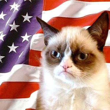 Instagram photo by Grumpy Cat • Jul 4, 2015 at 7:53 PM