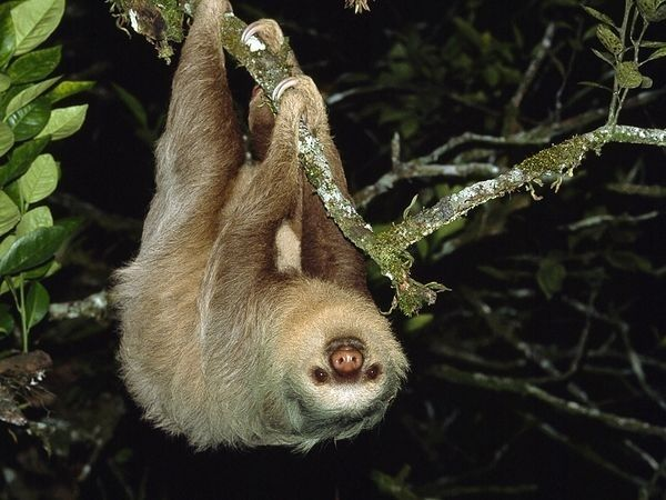 """5. """"Our main predators are jaguars, snakes, and eagles."""" 