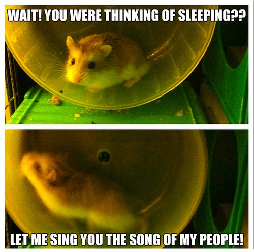 Hamster humor (20pics) (With images) Funny hamsters