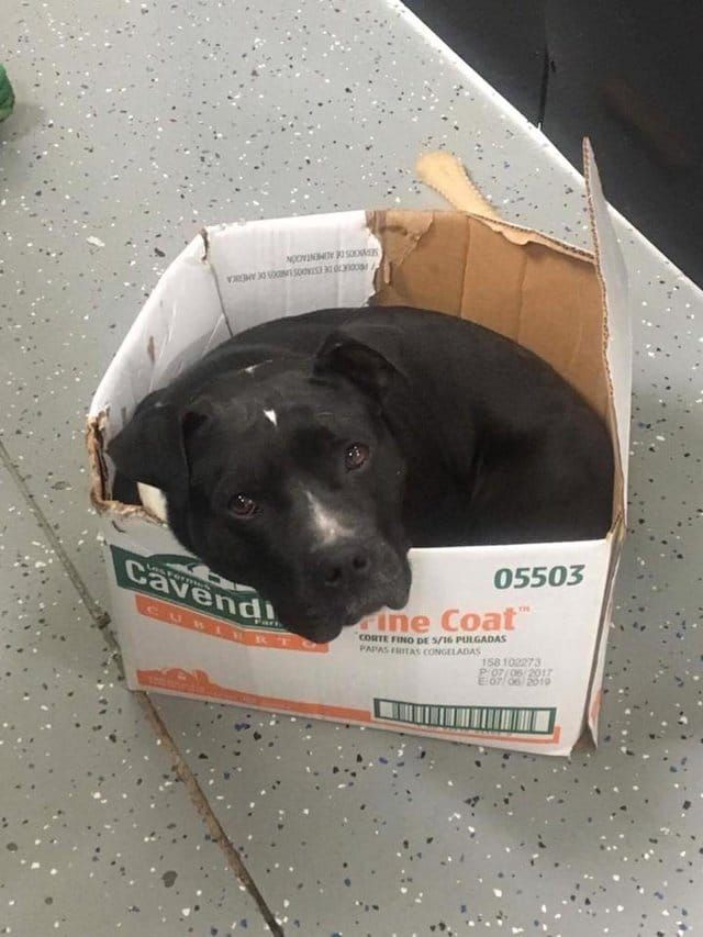 Homeless Dog Climbs In Cardboard Box To Nap New Owners Were Astounded To Find Out Why Homeless Dogs Dogs Rescue Dogs