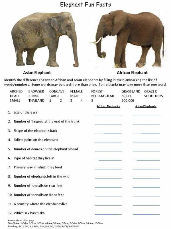 Elephant Fun Facts and games_Page_1 | Animals | Pinterest | Game ...