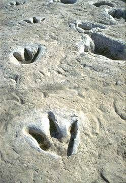 I would love to go and see the dinosaur footprints.  The little girl who dreamt of being a paleontologist REALLY wants to go.