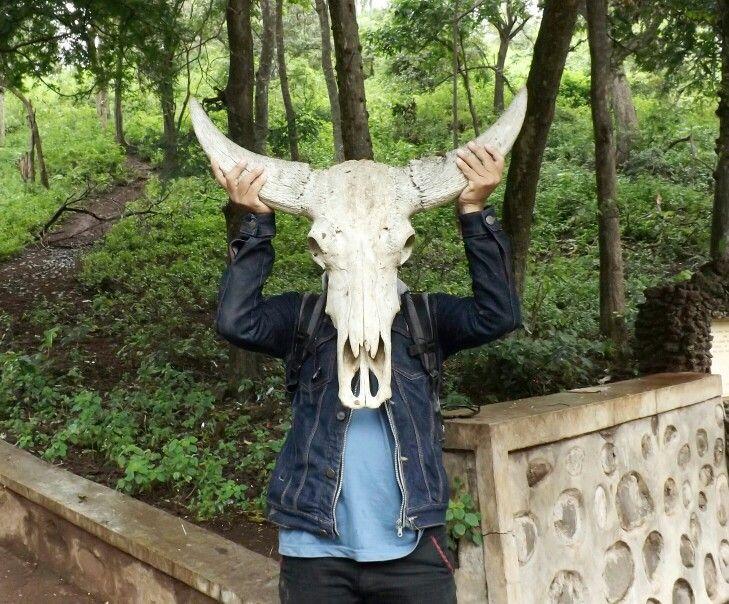 Bull Skull, Baluran National Park (Banyuwangi - Indonesia).
