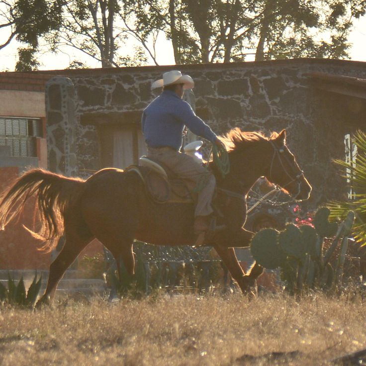 Did you know… That horses can gallop up to or around 44 kph (27 mph).  Wow, they are really fast! http://rancholascascadas.com
