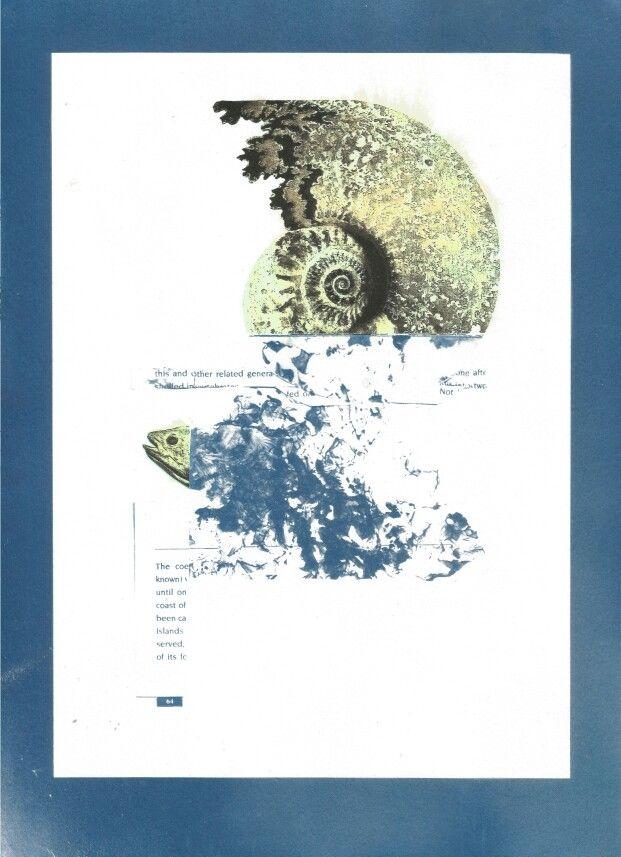 """Of Fossils and Fish"",2015- cyanotype and inkjet print (chloe obermeyer) #cyanotype"