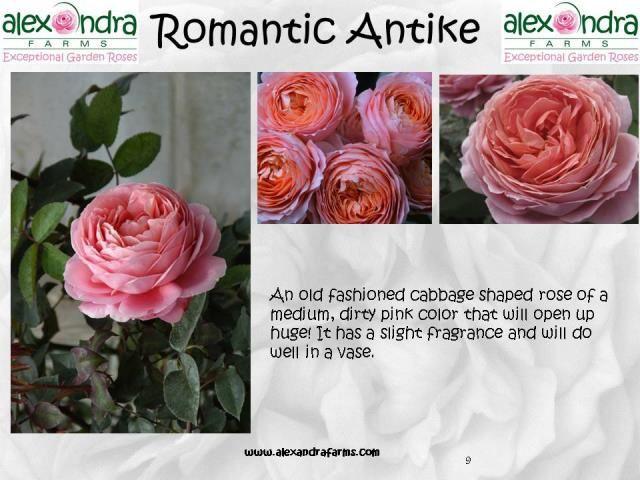 Romantic Antike