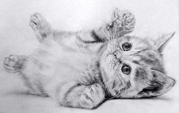 Картинки для срисовки котики как настоящие