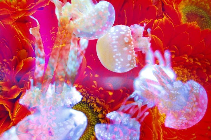 すみだ水族館が蜷川実花とコラボ! 「クラゲ万華鏡トンネル」を開催【2015】