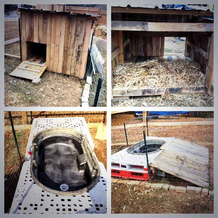 Our upgraded backyard duck resort.