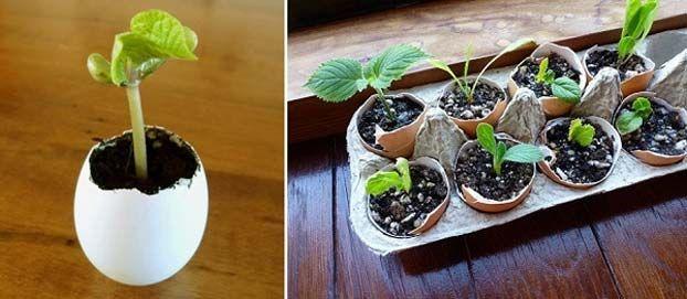 Vasi per giardino originali ed economici con i gusci delle uova