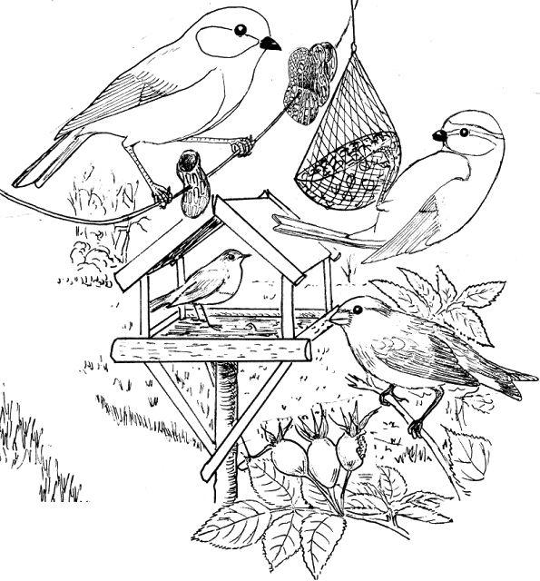 Kleurplaat Vogels Voeren In De Winter Kleurplaat Vogels Voeren In De