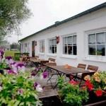 Stranddistel in Neuendorf auf der Ostseeinsel Hiddensee