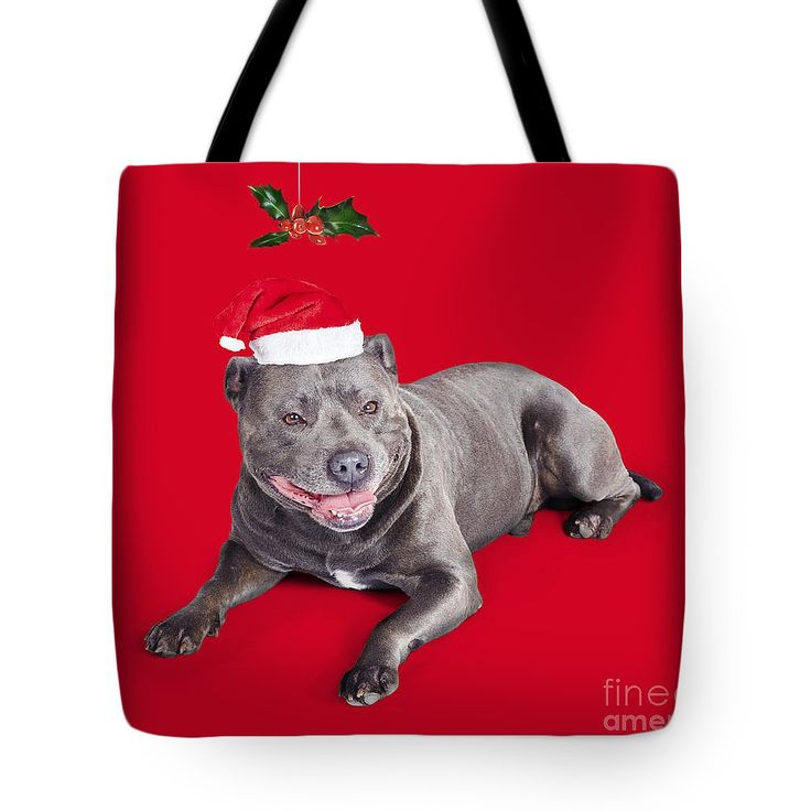 Christmas Gift Bag featuring the photograph Celebrating Christmas With A Blue Staffie Dog by Jorgo Photography - Wall Art Gallery