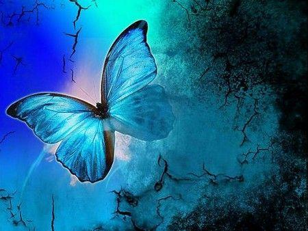 butterfly heaven wallpaper - photo #45