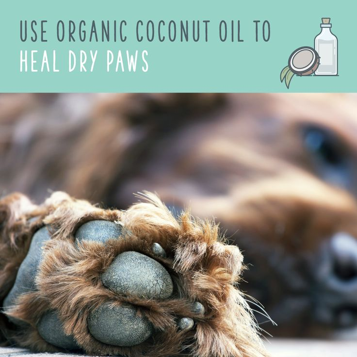If you notice your dog's paws are visibly cracked and dry, you can use a touch of coconut oil to soften them up.