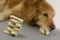 Hundekekse selber backen: 10 Rezepte, die dein Hund lieben wird