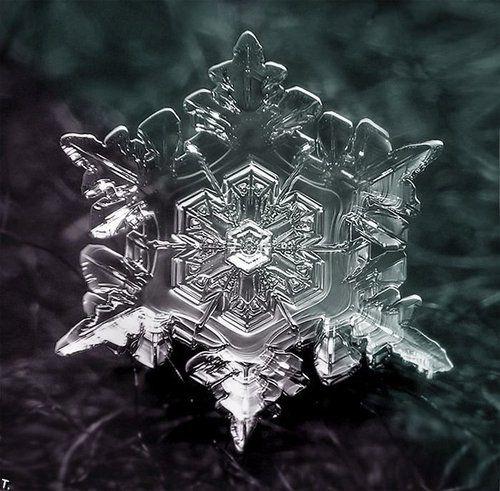 Belleza en frio