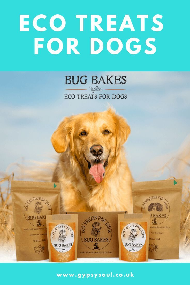 Bug Bakes Eco Treats For Dogs Dogs Pets Your Dog
