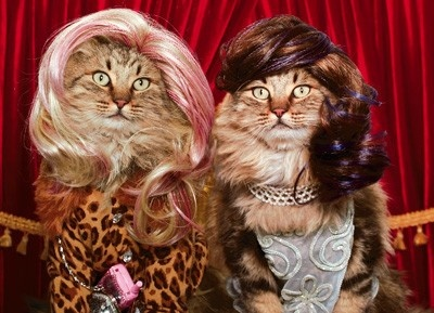 #funny, #cat, #hair, #friends, #cute, #animal, #humor  Swag: http://www.cafepress.com/tlconline: Shore Cat, Google Haircat, Dresses Up, Jersey Shore, Funny Pictures, Cute Pet, Christmas, Accidents Google, Funny Stuff