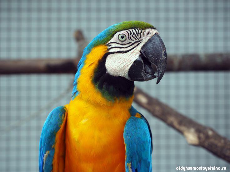 Попугай в Parrot Resort Moalboal на Филиппинах