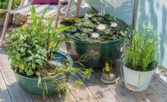 Ein Arrangement aus unterschiedlich bepflanzten Mini-Teichen verwandelt…