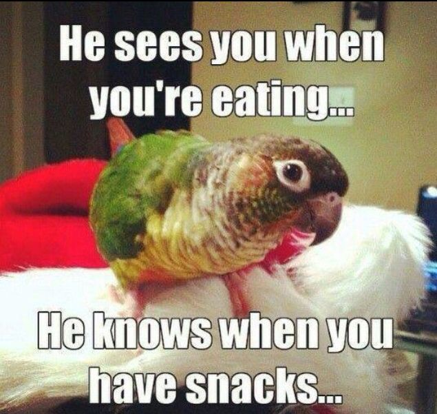 Always...big or little parrots. You HAVE to share your food. lol