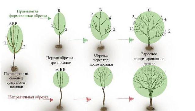 elaemsami.ru