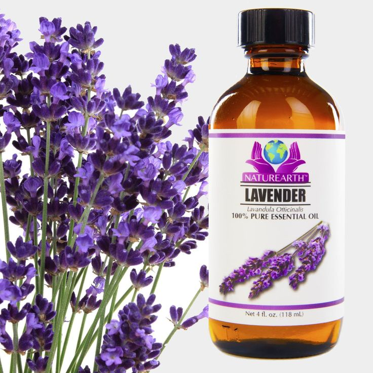 Lavender Powder For Bed Bugs