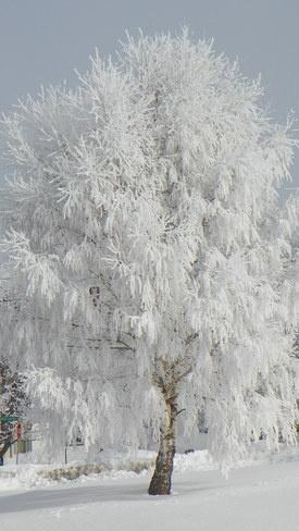 winter in Miramichi NB