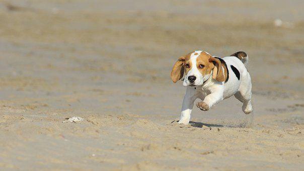 Master Dog Training Masterdogtrainingtips Dogs Dog Clicker