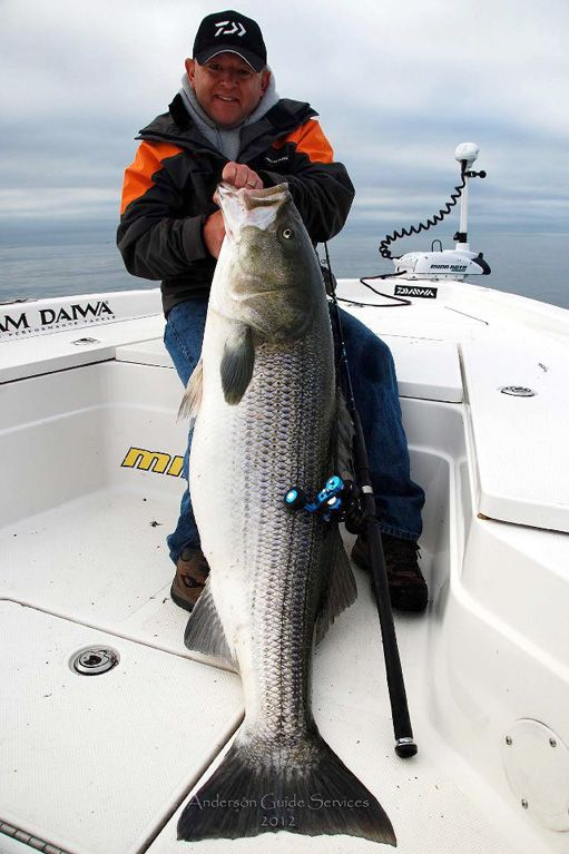 74 pound striped bass