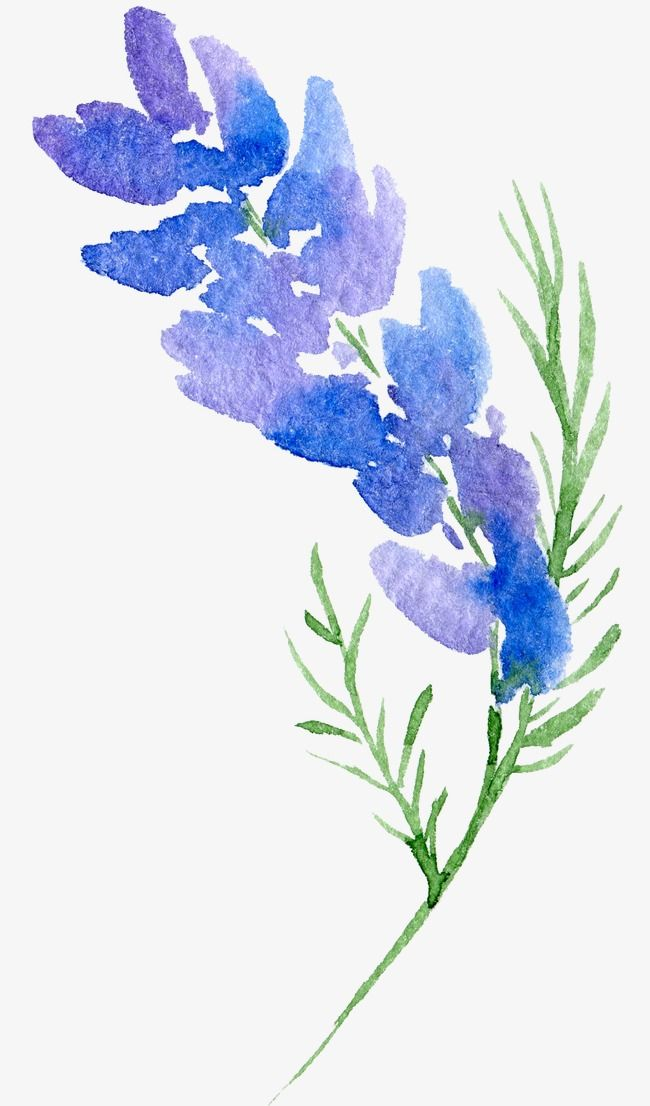 Transparent Background Floral Botanical Watercolor Flowers