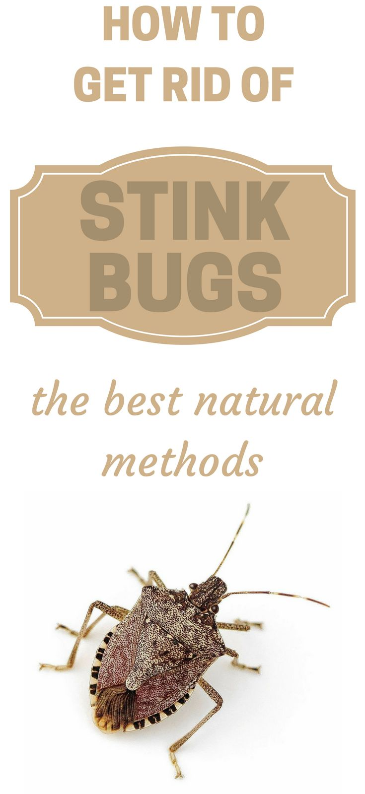 25 b sta stink bug repellent id erna p pinterest - How to get rid of stink bugs in garden ...