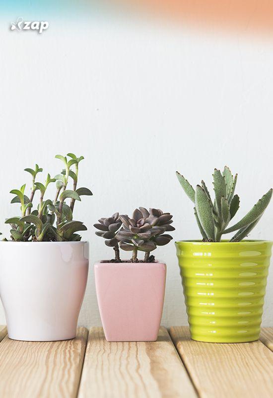 Você sabia que o cultivo de certas plantas repelentes pode não só deixar a casa mais charmosa, mas criar uma barreira contra os insetos?! Clique na imagem e saiba mais!