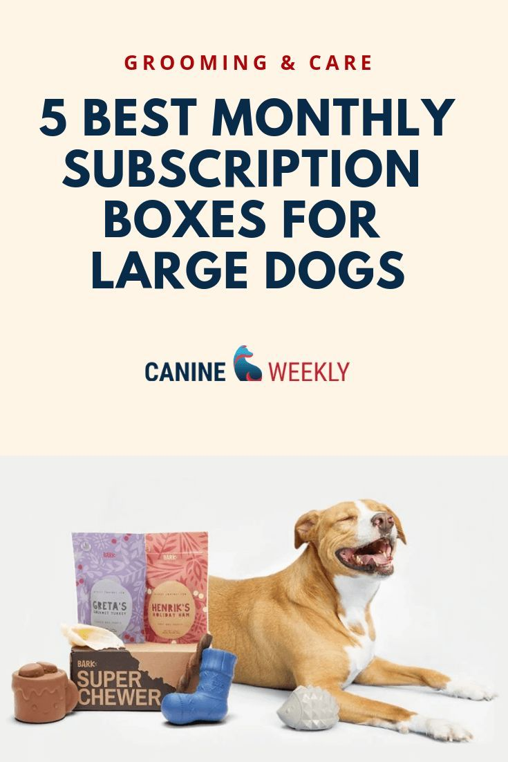 5 Best Dog Subscription Boxes For Large Dogs In 2020 Dogs
