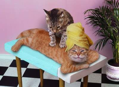 Spa Day Cat