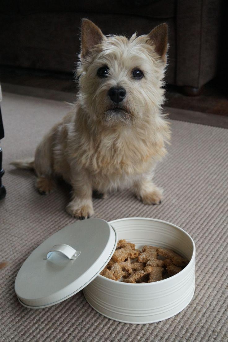 Norwich terrier cookies