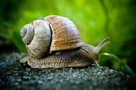 Snail Facts For Kids | Snail Behavior, Diet, Habitat, and Reproduction