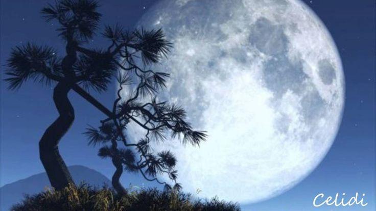 Shy Moon      Caetano Veloso