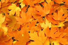Fundo de folhas de outono laranja stock photo