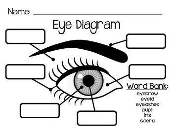 parts of the eye preschool worksheet - Google Search