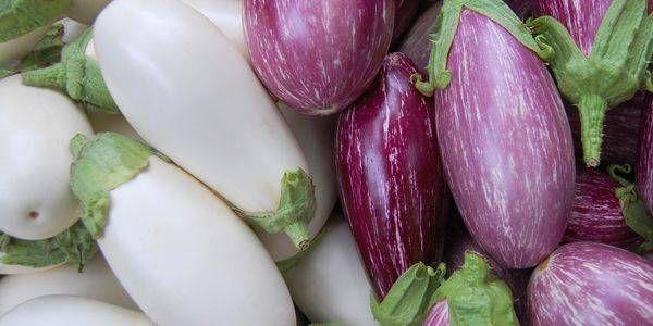 La melanzana (Solanum melongena): la pianta delle uova
