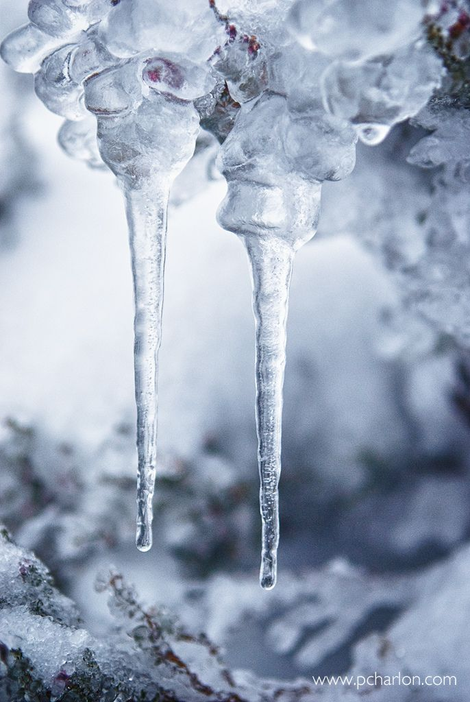 Icicles, everywhere in Scotland in the winter!